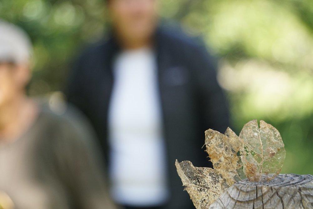 leaves ANFT.jpg