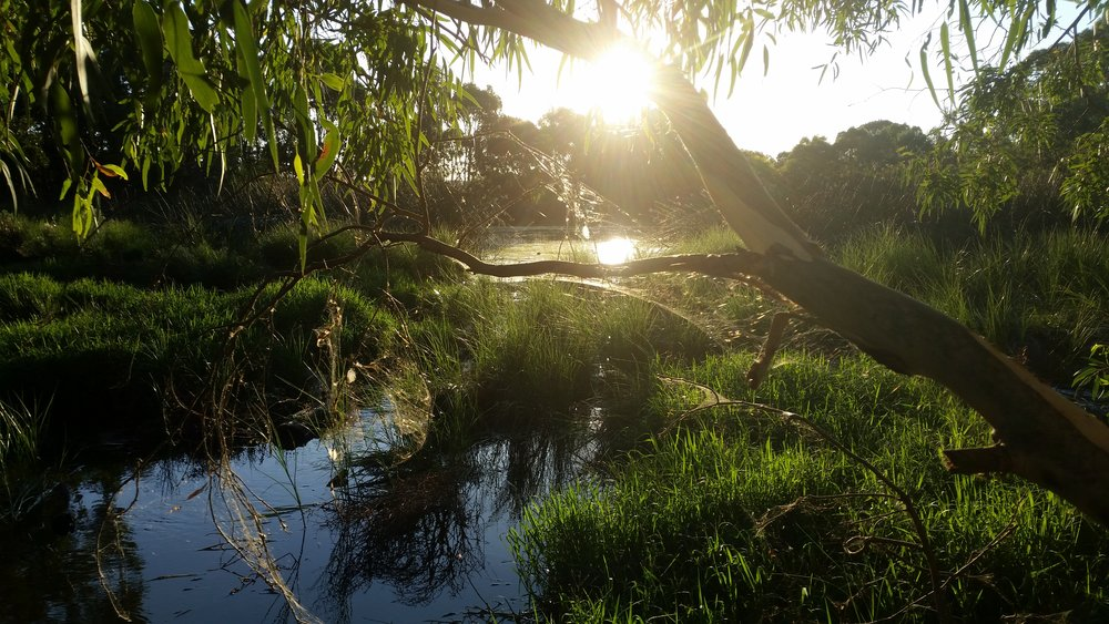 backlit wetland.jpg