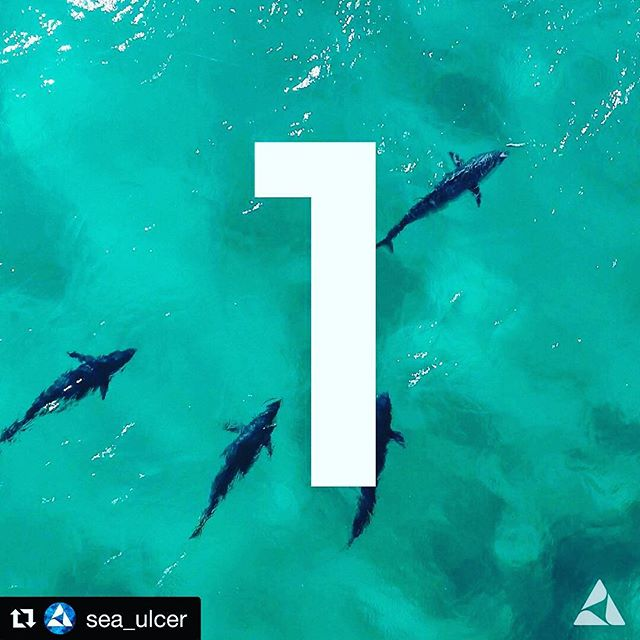 #Repost @sea_ulcer  1 DAY TO GO… It's here, tomorrow!  #skyrigger #newproduct #advantageabove #seaulcer #dronefishing #tuna @jaidenmaclean @spearfishing_reviews @spearfishing_international