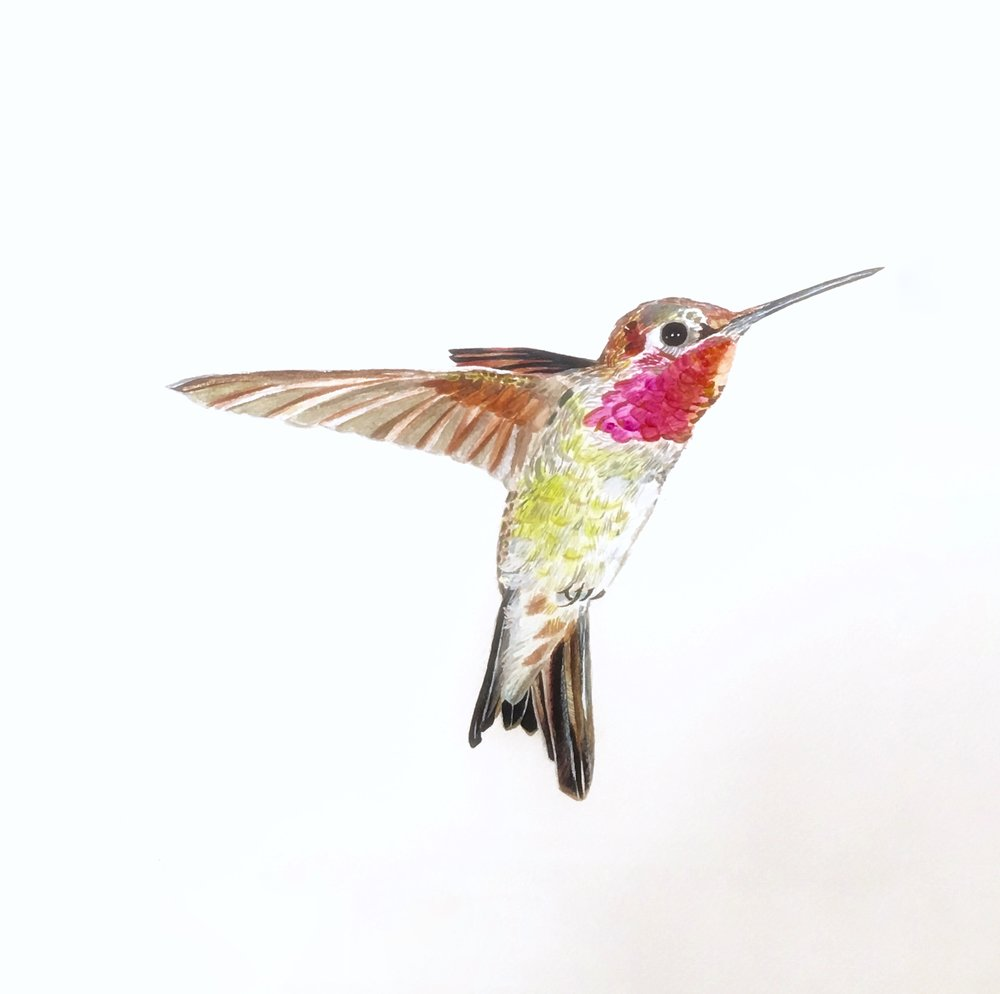 Hummingbird for a Yoga Retreat Centre in the South of France - sold