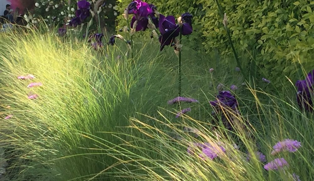 The long border by London Gate - a tactile wave of Stipa tenuissima grass interspersed with scabious and Iris 'Sable'.
