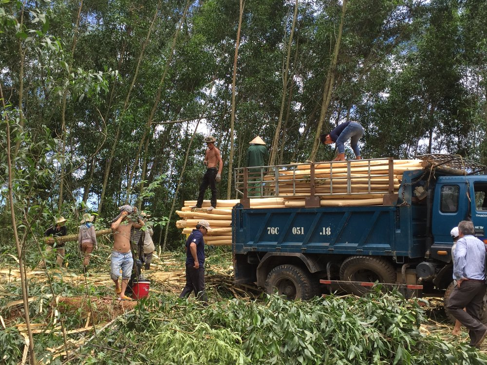 A logging site in Hue, Vietnam