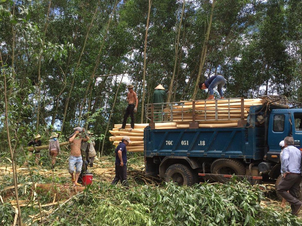 En avverkningsyta i Hueregionen i Vietnam