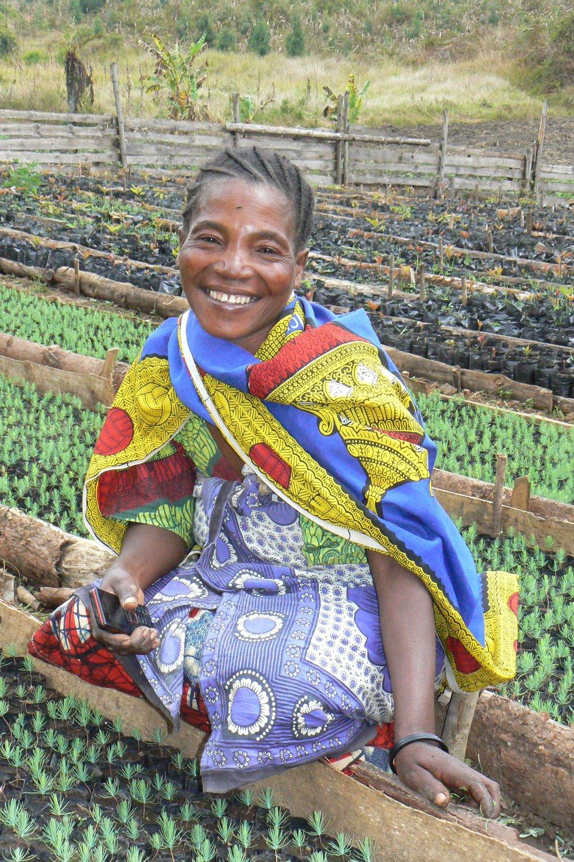 Nainen töissä taimitarhalla Njombessa, Tansaniassa. Kuvassa olevat taimet ovat männyntaimia.
