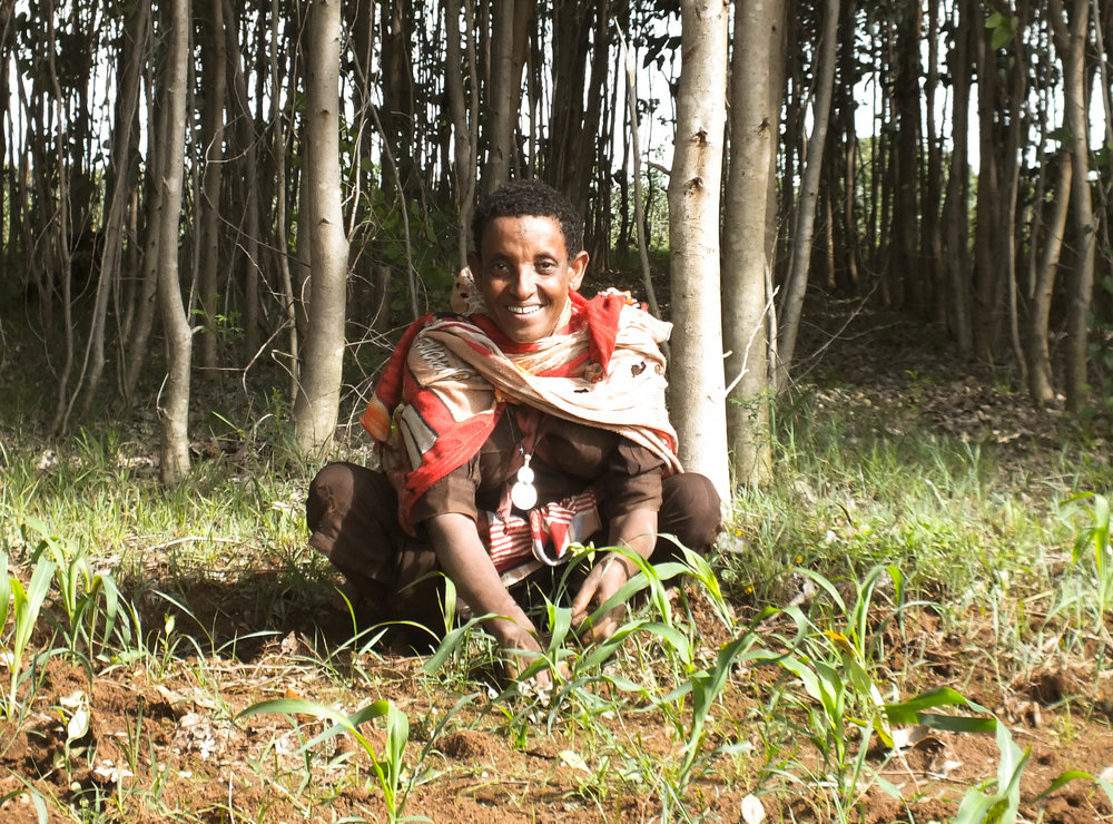 An Ethiopian woman is planting saplings