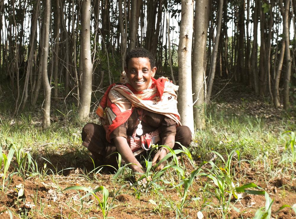 Etiopialaisnainen puita istuttamassa