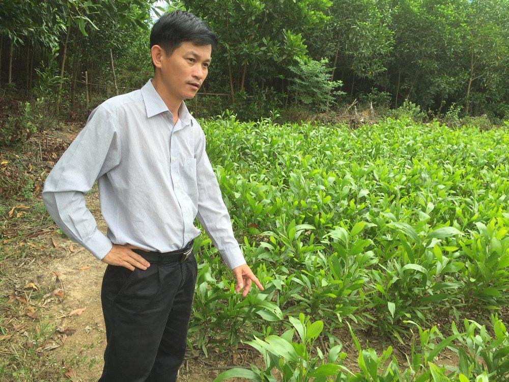 Doktor Ha från universitetet i Hue i Vietnam visar akacieplantor.