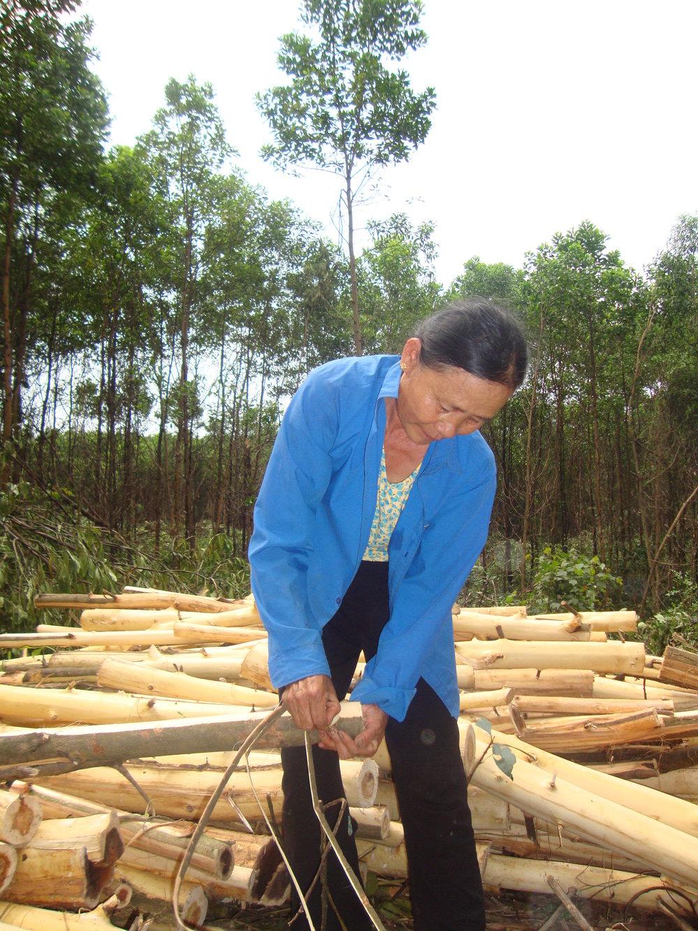 En kvinna i Vietnamn barkar fällda akacieträd.