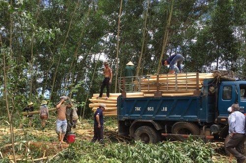 Metsänhoitoa Vietnamin Huessa. Kuva: FFD
