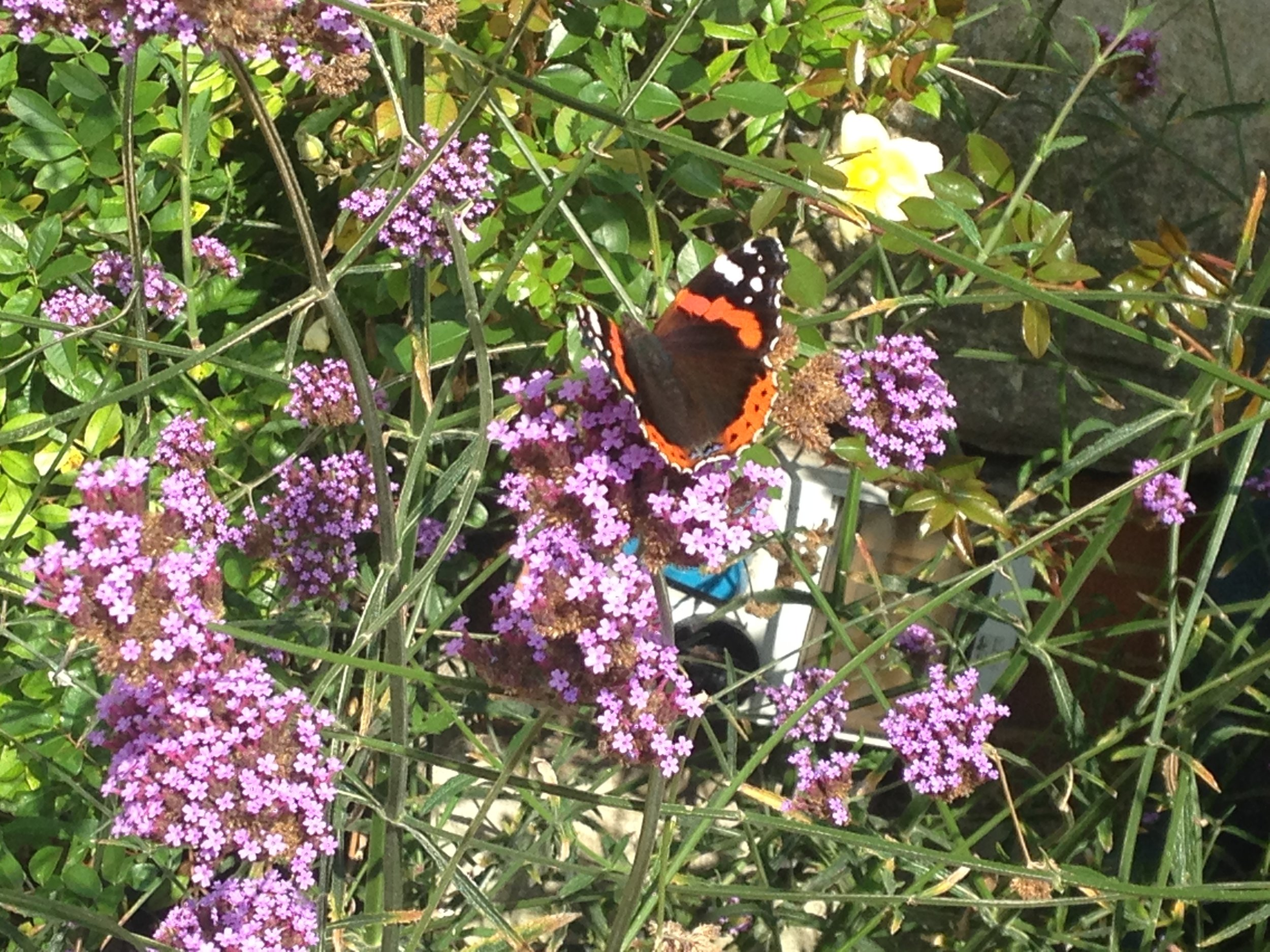 A lovely butterfly I found outside the church. What a gift from God.