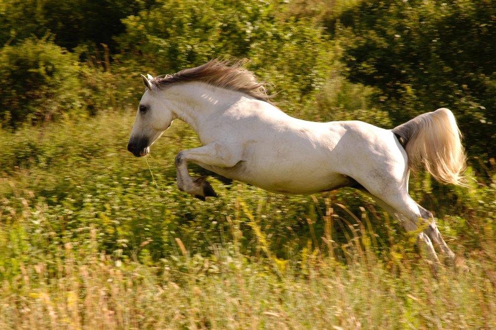 animal-cavalry-countryside-629139.jpg