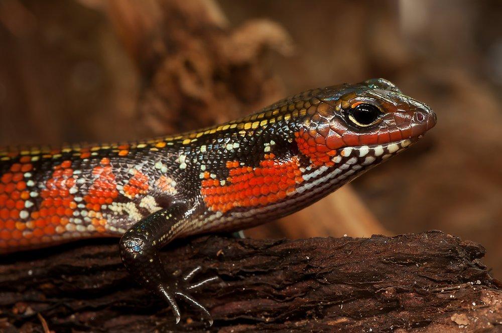 We'll call him the lust lizard...