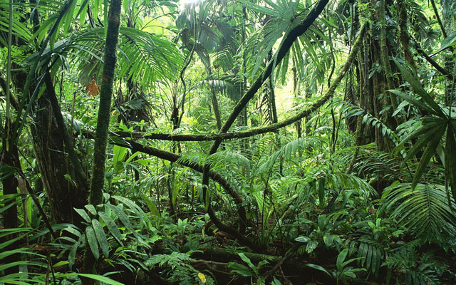 In Than Sadet National Park, we will hike up to the Cloud Forest to learn about the ecology and see the amazing view of the Coconut Plantations from the Dome Sila viewpoint.