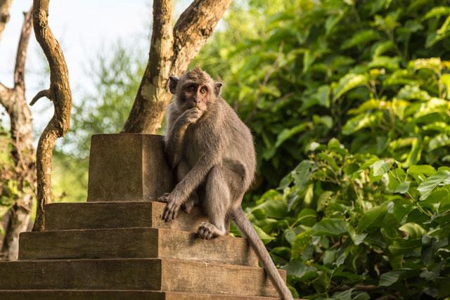 Meet Bali's infamous monkeys who live around the Uluwatu Temple Complex