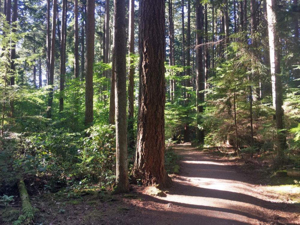 the-evergreen-forest.jpg