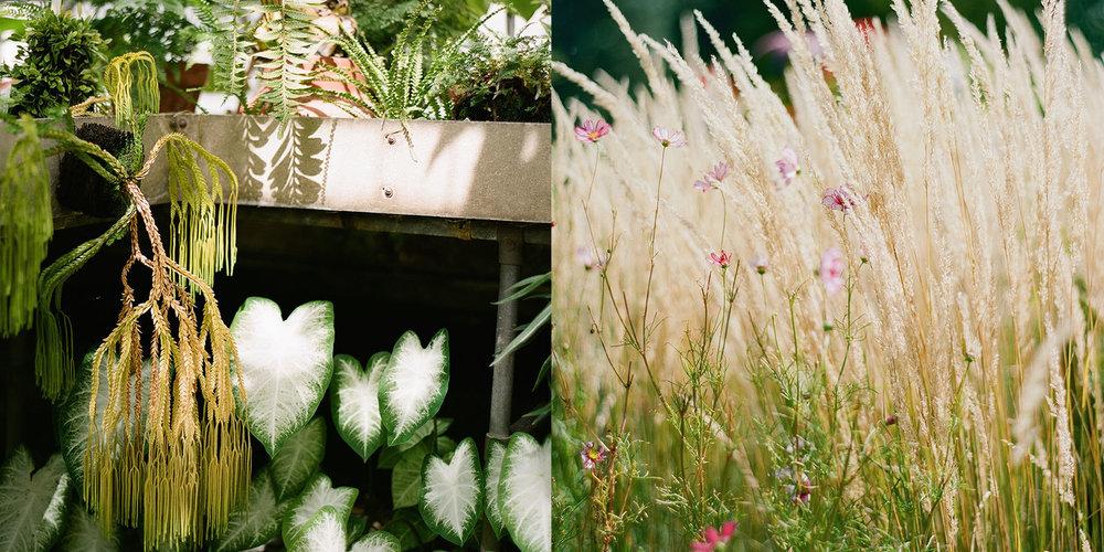 - Quintessential BotanicalBora & David