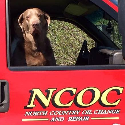 NCOC Dog.jpg