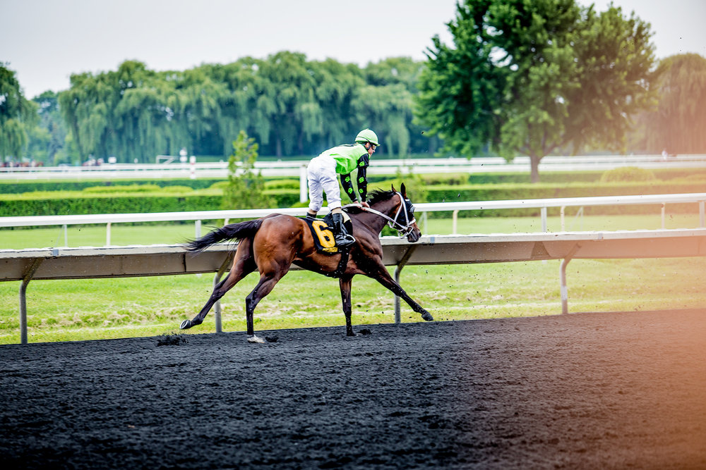 Race_Horses_285_2000x2000.jpg