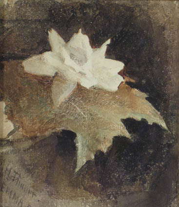 Waterlily , c. 1881 Watercolor on paper 6 x 5 1/2 inches  Inquire