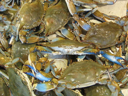 800px-Blue_Crabs_at_Maine_Avenue_Fish_Market.jpg