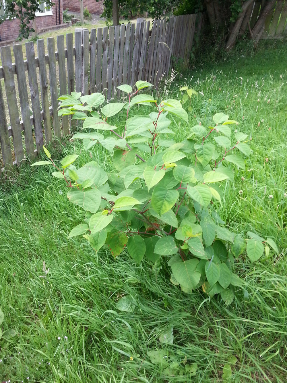 KNOTWEED SITE SURVEYS   Information on arranging your site survey and what to expect