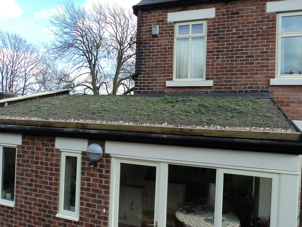 Residential Green Roof, early stages