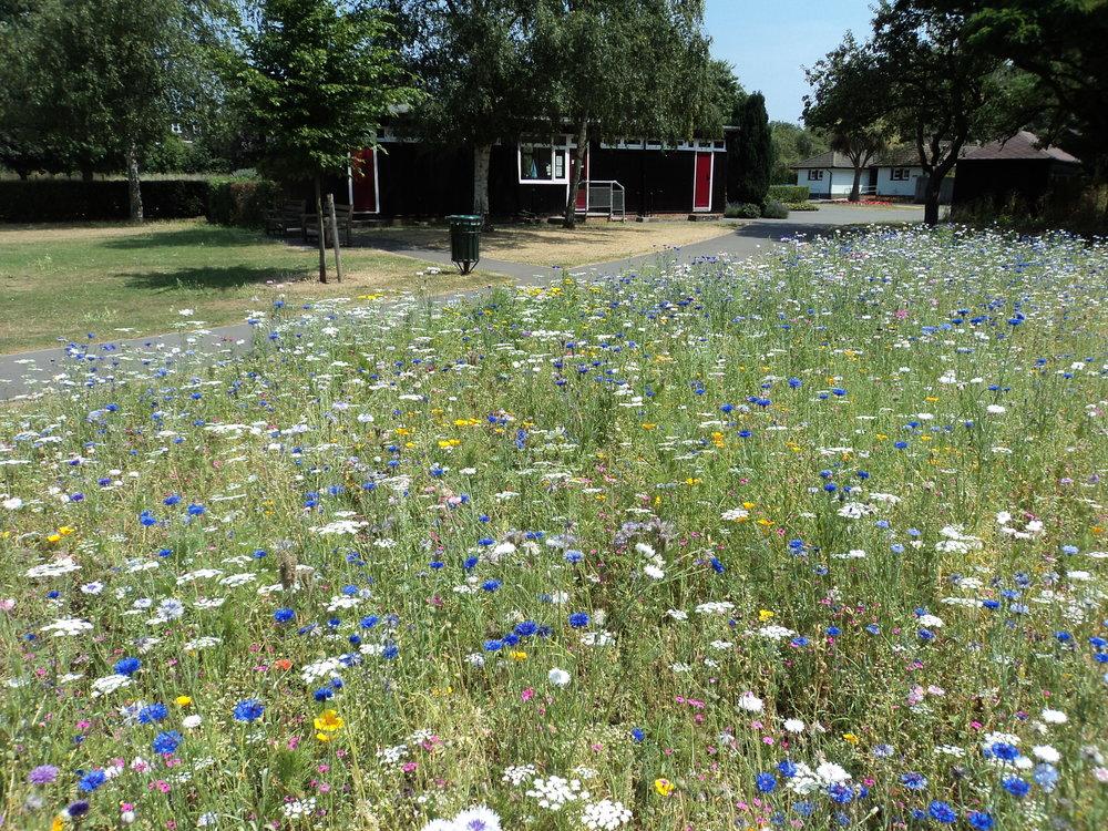 Annual meadow flowers London.JPG