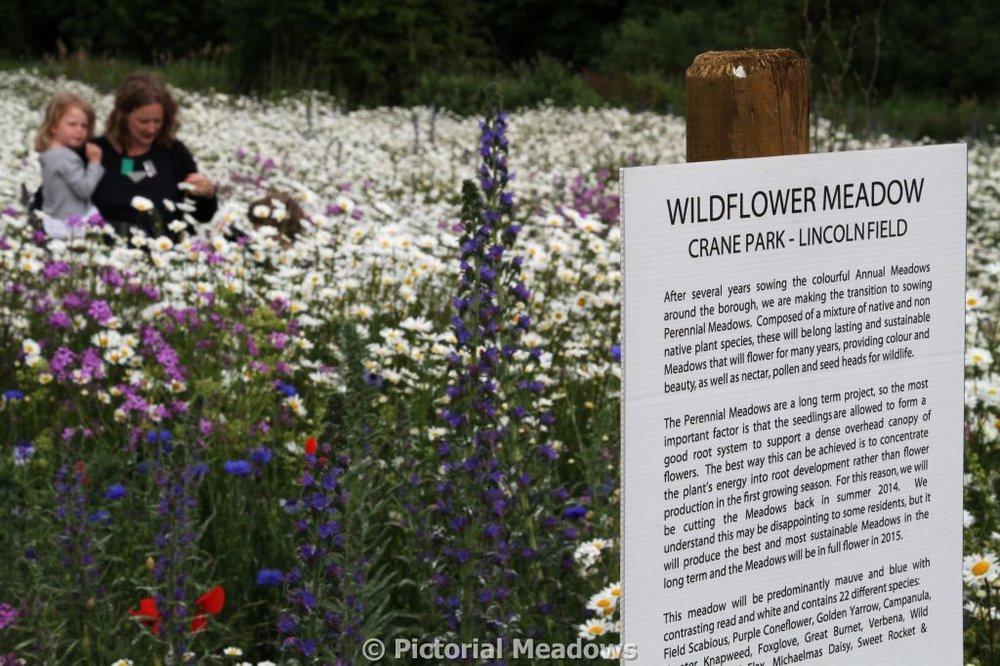 Crane Park Wildflower Meadow Information Board.JPG
