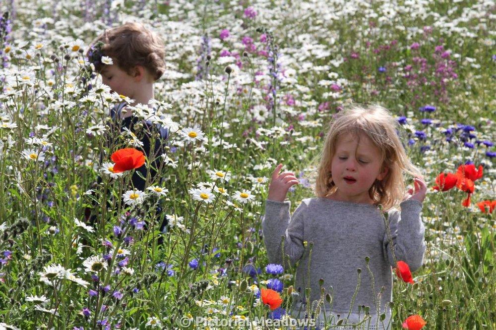 Children in a wildflower meadow London.JPG