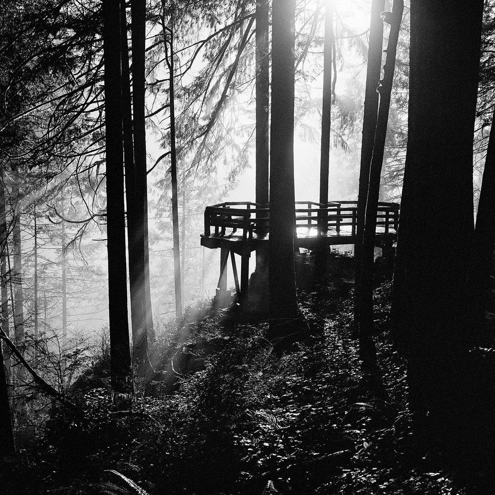 Foggy_Trees_VI.jpg