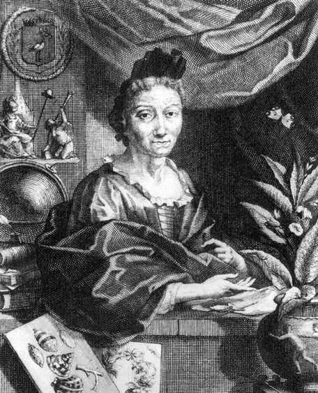 Portrait of Merian at work by her son-in-law Georg Gsell (1717).