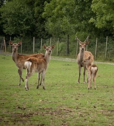 Deer management -