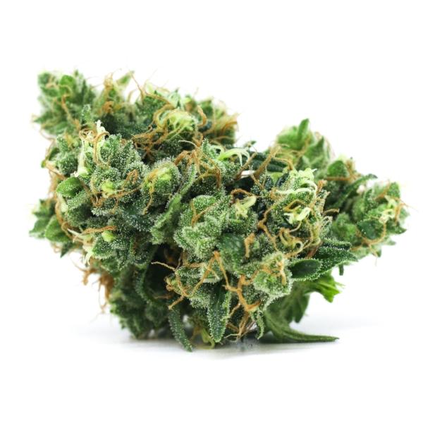 Deathstar Fresh Flower