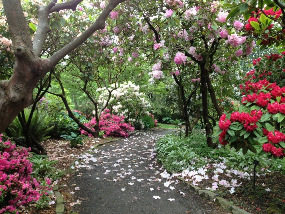While many flowers will not be in bloom this time of year, a walk through the Crystal Springs Rhododendron Garden is sure to be romantic. Image Courtesy: Activerain.com