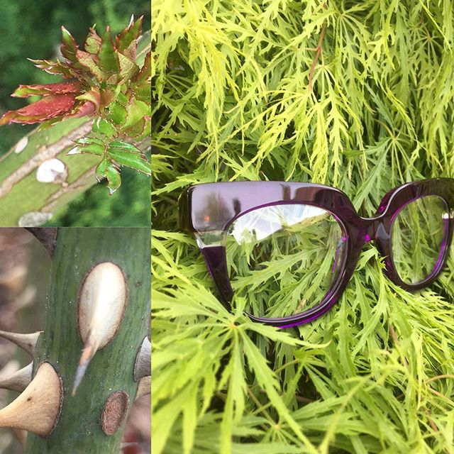 A beautiful stroll through #portlandrosegarden with @anneetvalentin #shoplocal #portlandsun #springtime #shoplocal #rose #weekend #eyewear #everyrosehasitsthorn #washingtonpark #keepportlandweird