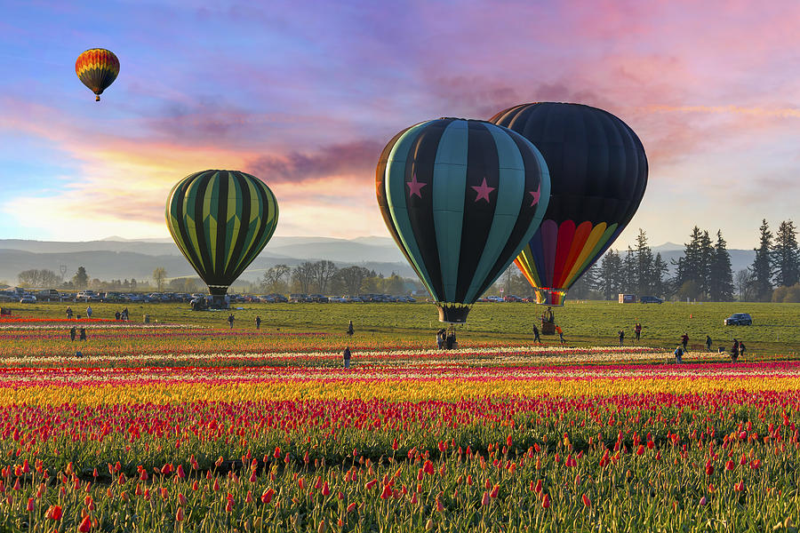 If the weather is cooperative, weekend activities at the Wooden Shoe Tulip Fest includes hot air a balloon rides! What a way to view the gorgeous fields! Image Courtesy: fineartamerica.com