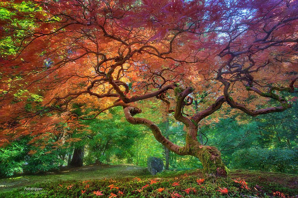 Portland's Japanese Garden. Image Courtesy: Gavin Hardcast