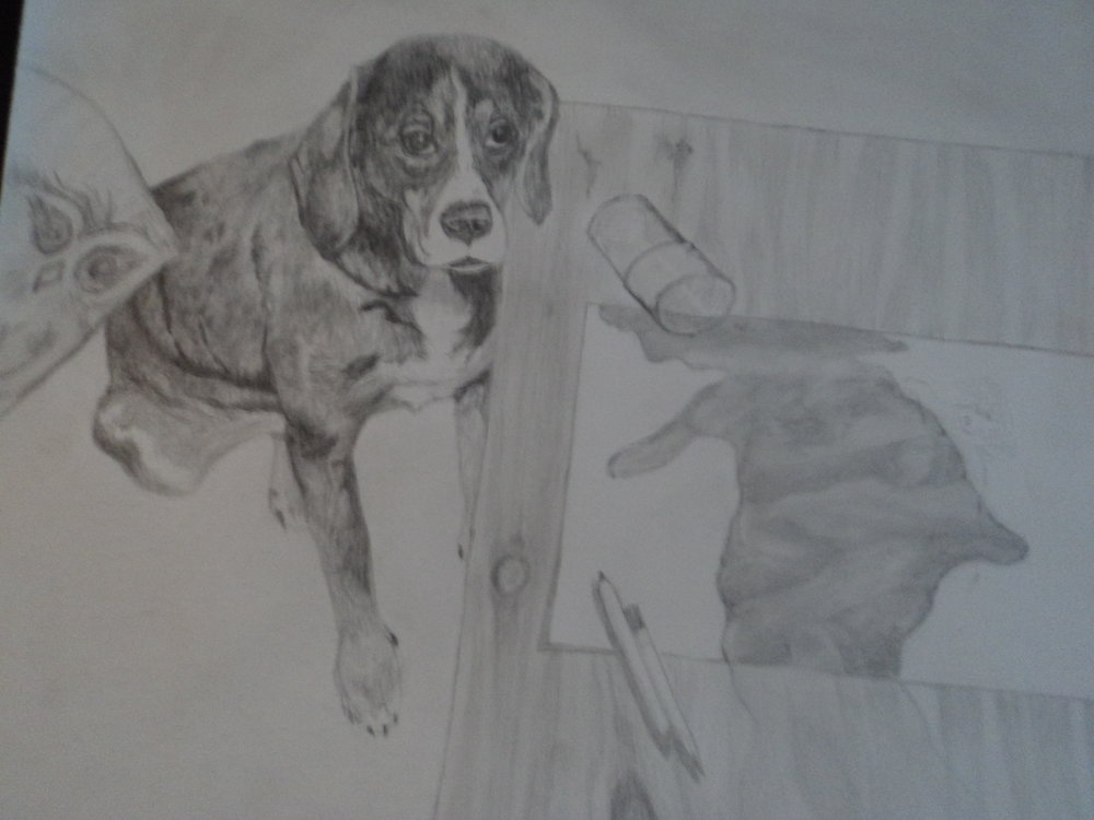 This is a pencil drawing of my dog Hunter
