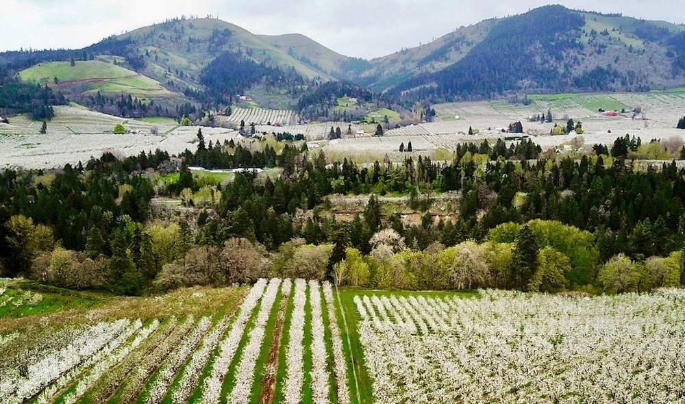 Hood River Valley in bloom. April 2018. Photo by Dan Kleinsmith.