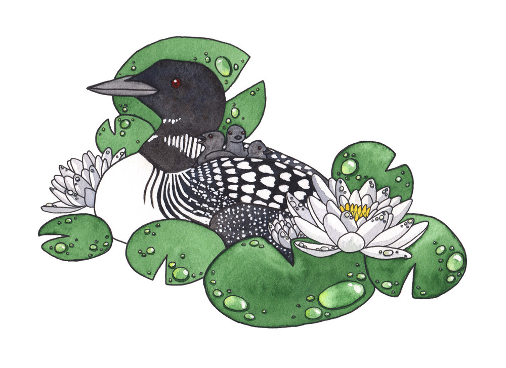 Loon & Water Lily, 2017   Pen & Watercolor