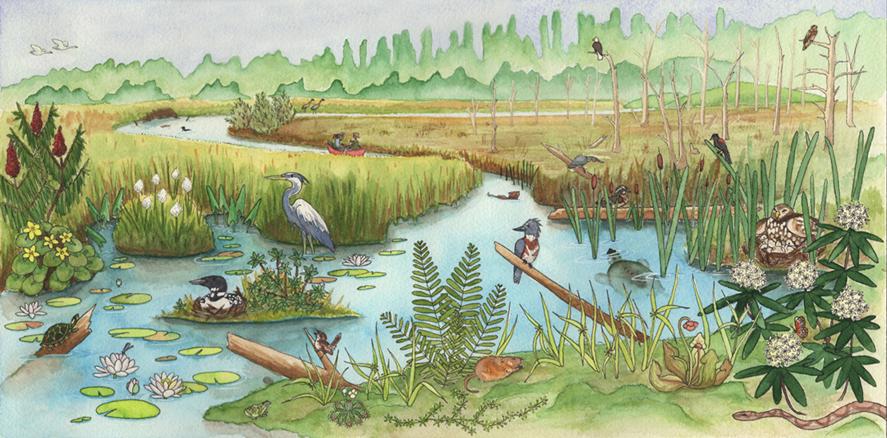 Michigan Wilderness - Wetlands, 2017 Pen & Watercolor