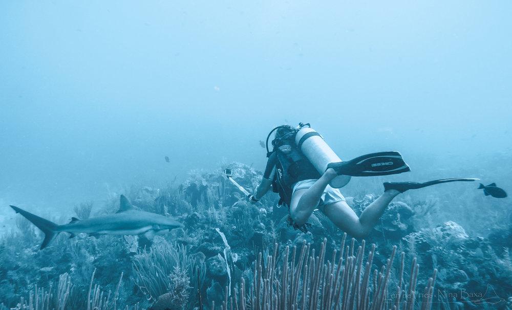PA140025 reef shark,   Johanna-1-2.jpg