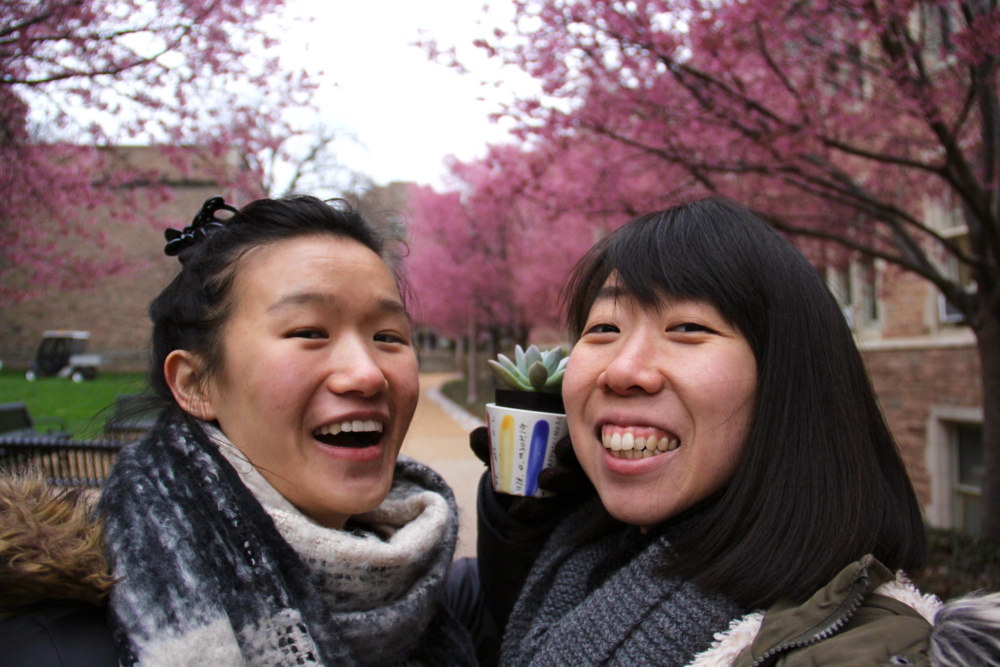 """Beautiful cherry blossoms on WashU's campus - Us and Minerva's new succulent friend that she named """"Saya"""""""