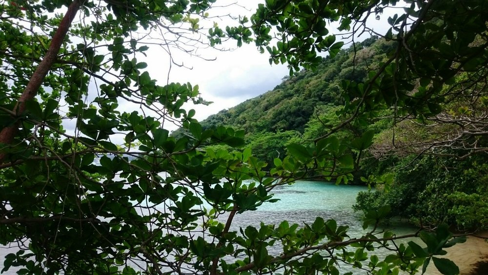 """Little Dunns River, Ocho Rios in Jamaica. 2015 - The ocean just past the brush is like """"hope"""" just past obstacles to me"""