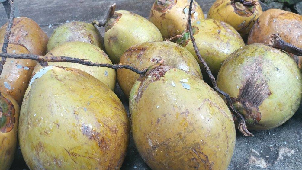 Kindred coconuts in Da Nang, Vietnam. 2017
