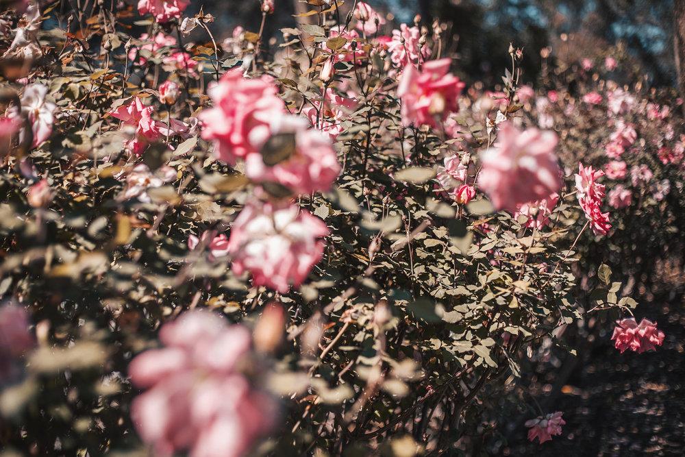 cluse-la-garconne_araluen-botanical-park_21.jpg