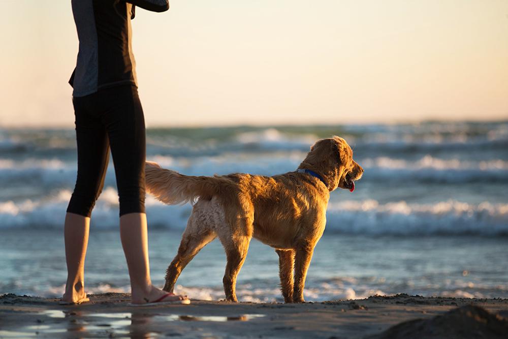 Dog-Friendly-Spots-Near-Carmel-Valley-San-Diego.jpg