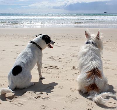 del-mar-dog-beach.jpg
