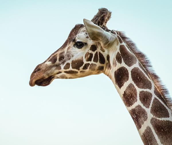 safari-park-escondido.jpg