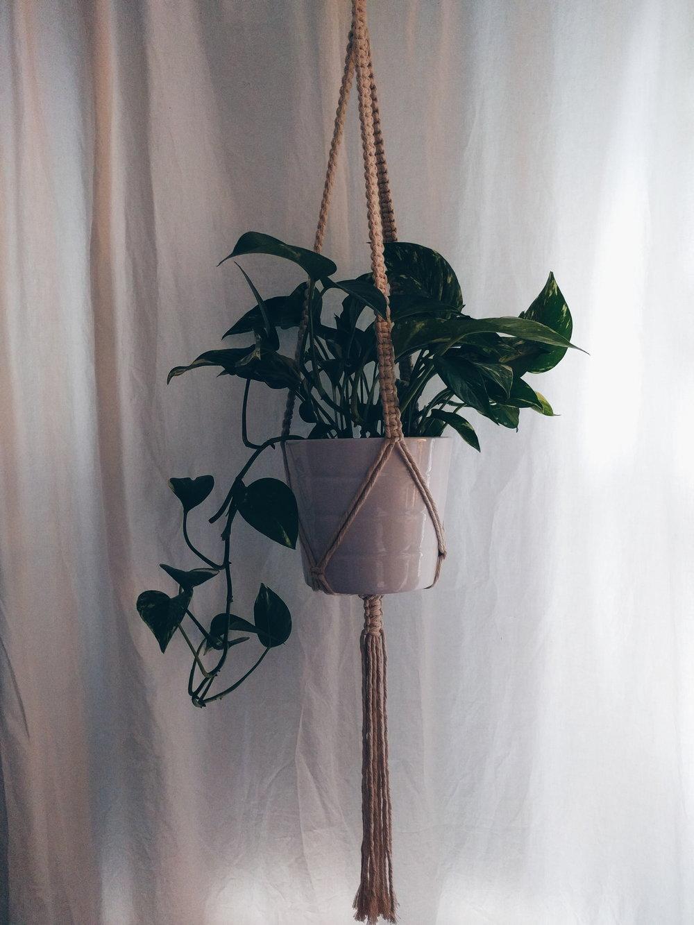 plant hangers -